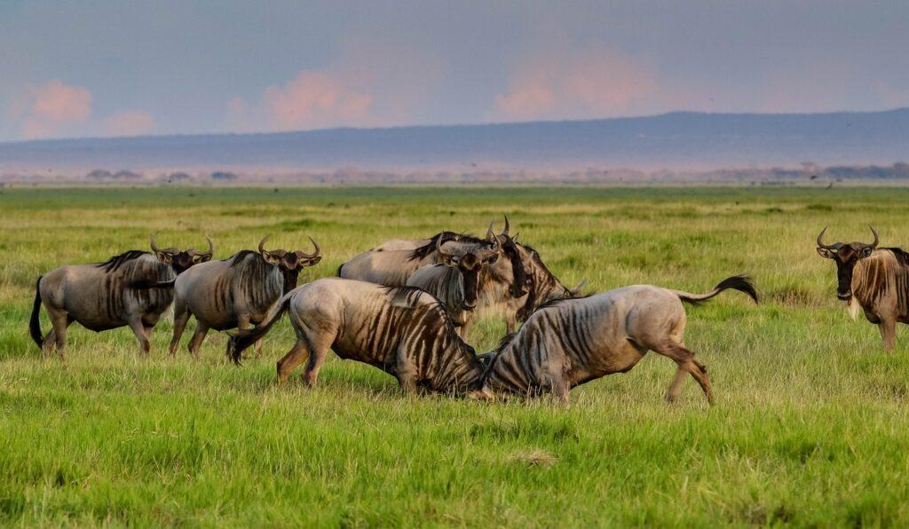Kenya, Landscape